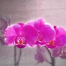 Orchids by Alana Ranney