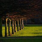 Winter Sun by Greg Webb