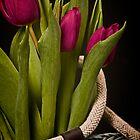 Tulipa Gesneriana by Dania Reichmuth