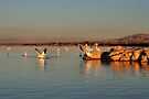 Pelicans in First Light - Salton Sea by Jo Nijenhuis