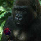 Happy Valentine's Day by Linda Cutche