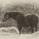 Horse in Field  by scarletjames
