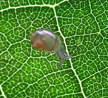 Green by Sarah Jennings