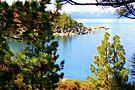 """""""Tahoe Inlet"""" by Lynn Bawden"""