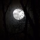 Lovely Luna by Anima Fotografie
