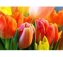 Toujours Tulipes Photographic Print
