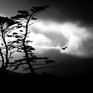 rider on the storm by Anima Fotografie