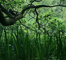 oak tree and reeds by Breo