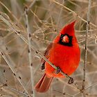 Hot Red by Jeannine St-Amour
