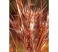 Winter Weed Photographic Print