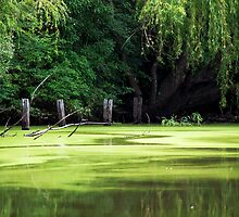 Smith Park - Pughs Lagoon... Richmond NSW by JennyMac