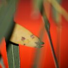 Gum leaves against a red sky WA by purpleneil59