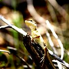 Northern Territory Lizard by purpleneil59