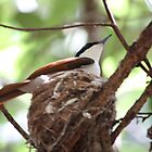 Nesting Bird - Northern Territory by purpleneil59