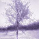 My Winter Tree by mimulux