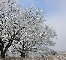 Winter Blossom by J J  Everson
