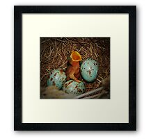 New Born Mockingbird Framed Print