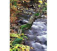autumn poem Photographic Print