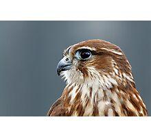 Merlin portrait Photographic Print