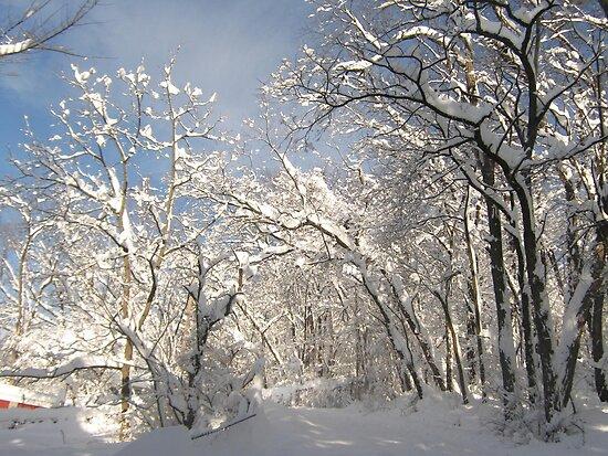 Winter Solitude by Quinn Blackburn