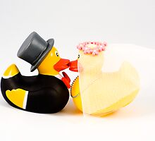 Wedding ducks in love! by Sandra O'Connor