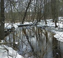 Swan Pond Brook2 by MaryinMaine