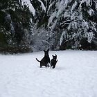 Dogs in winter by skreklow