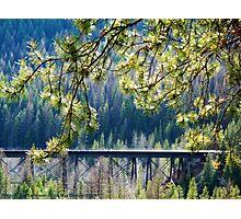 Tracks Through Glacier Photographic Print