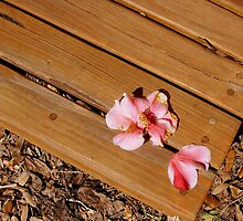 Flower on a Bench by Barbara3js
