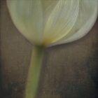 Delicate Goblet by Kevin Bergen