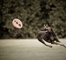 Frisbeeeeee....! by Bec  Brindley