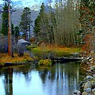 """Tuolumne River"" by Lynn Bawden"