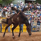 Bronco Busting by shippy56