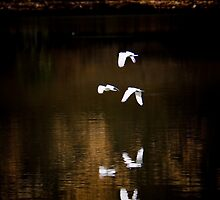 Reflected Birds by Rob Beckett