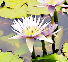 waterlily by edyazry