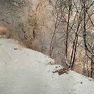 kingdom of winter by Patrycja Makowska