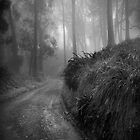 Softly we go...  by Richard Mason