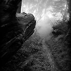 Stepping into the Woods by Richard Mason