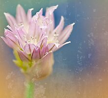A Single Winter Chive  by Marilyn Cornwell