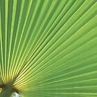 Palm leaf by FizzyImages