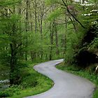 War Creek Road, Morgan County, KY by Kent Nickell