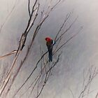 Crimson Rosella by Peter Brandt