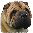 Shar Pei by Cazzie Cathcart