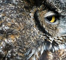 Owl Portrait. by oscarcwilliams