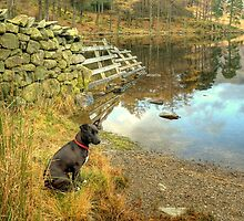 Two Tarns And A Fence by Jamie  Green