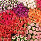 Mosaic of Petals by Malcolm Roberts