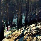 Elvington Woods by Annique Albericci