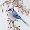 Blue jay in the apple tree by bettywiley