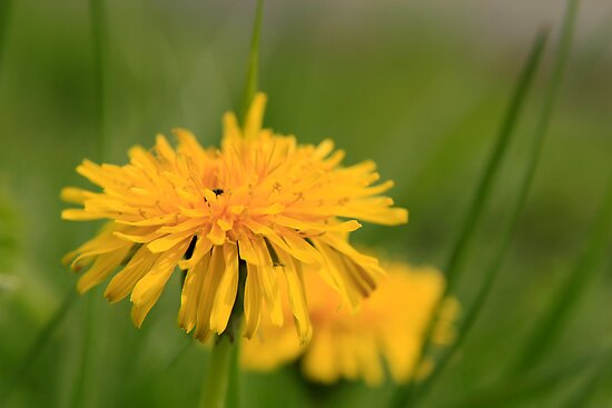 Yellow flower by Roberto Irace
