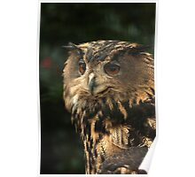 Portrait of an Eagle-owl  Poster